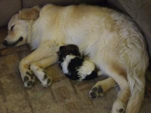 Basil and Koda sleeping
