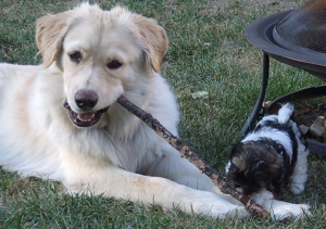 Basil and Koda