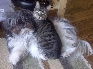 Basil and Sally lying on