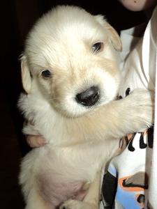 Koda at 3 weeks