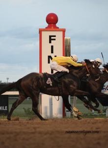 horse finish line