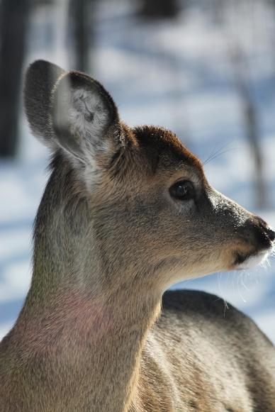 2017-02-deer-2