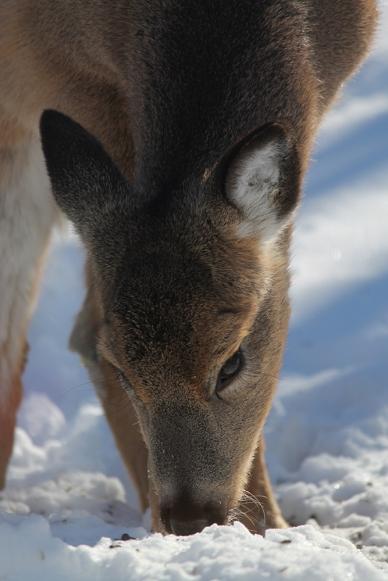 2017-02-deer-3